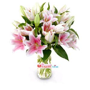 Bunga Vas Casablanka