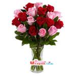 Vas Mawar Merah Pink (BUV 25)